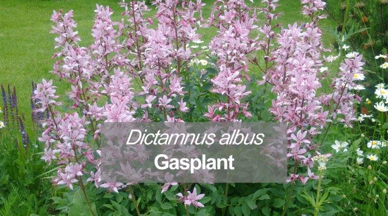Understanding botanical names