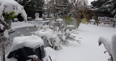 Go ahead! Leave your perennials till spring.