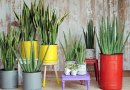 Die hard houseplants for the brown thumb (part 1 of 3)