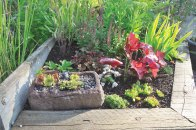 Succulent displays are placed throughout the garden.