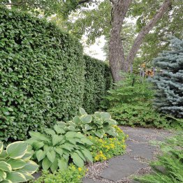 A cotoneaster hedge winds around the back of the yard, discretely concealing the working area.