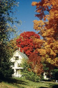 trees in fall lose their green color