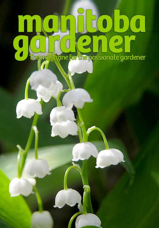 manitoba gardener magazine canada lily of the valley