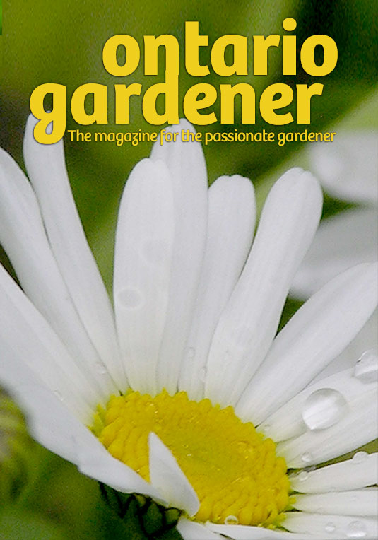 ontario gardener magazine canada daisy