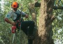 When to call an arborist