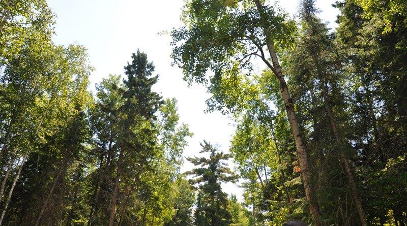 how trees talk
