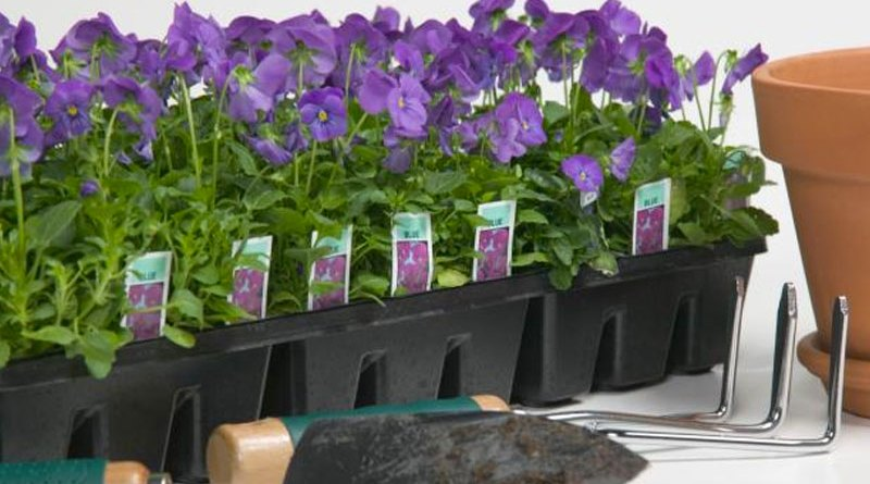 More tips for planting early