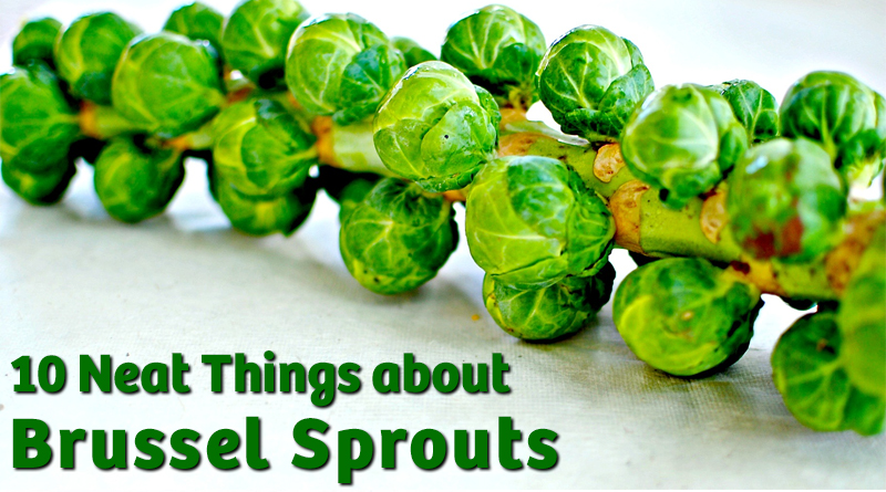 10 Neat Things about brussel sprouts