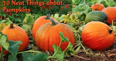 10 Neat things about pumpkins