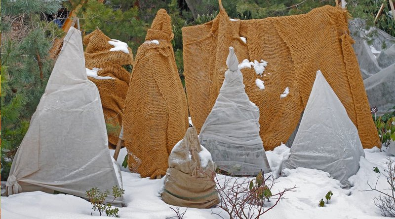 what in the garden should you wrap for winter