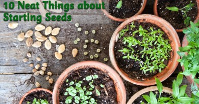 10 neat things about starting seeds