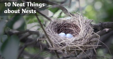 10 neat things about nests
