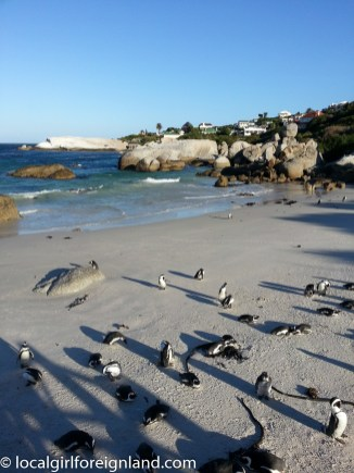 southafrica201403-105