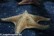 aquarium de la guadeloupe-2165