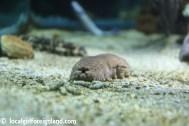 aquarium de la guadeloupe-2320