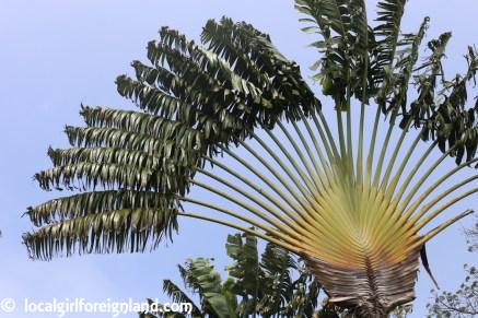 Jardin Botanique de Deshaies Guadeloupe-4446