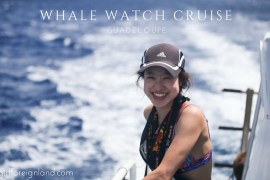 Whale watch cruise, Guadeloupe
