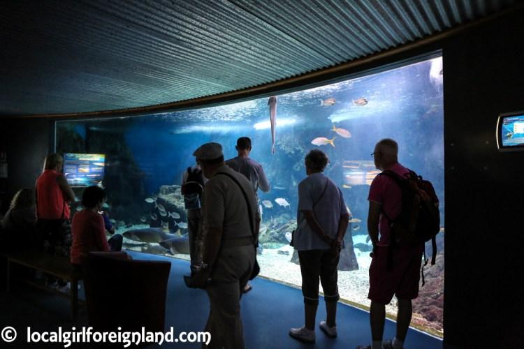 aquarium de la guadeloupe-2299