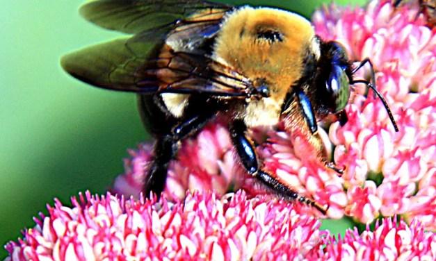 PHOTO: Busy bee