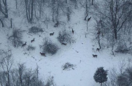 Aerial survey of deer in a Washtenaw County natural area, 2014. Photo by Shawn Severance, WC Parks.