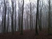 Misty trees, early January Andrew's Wood near Shoreham
