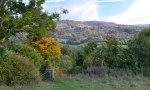 Near Filston Lane, Shoreham, autumn colours