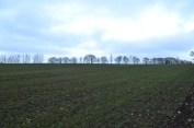 Trees on skyline,
