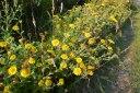Flowers on Ightam Mote walk