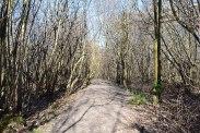 Newtye Hurst Wood near Hever