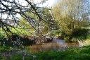 2017-04-09-17.04.54-blossom-river