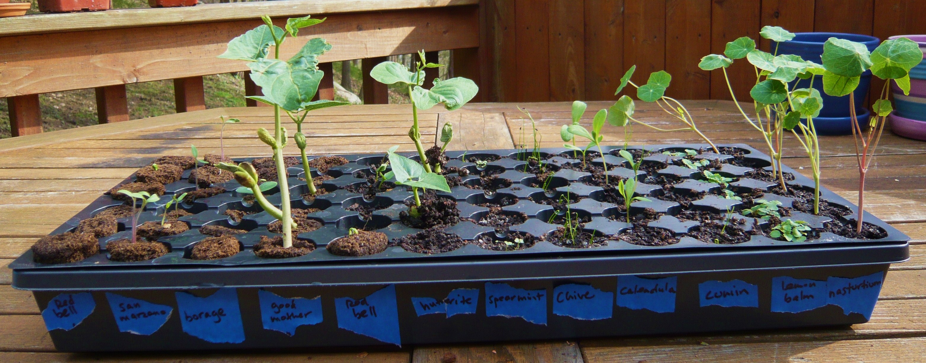 Seed tray started April 13; Earth Plugs on the left, container mix on the right.