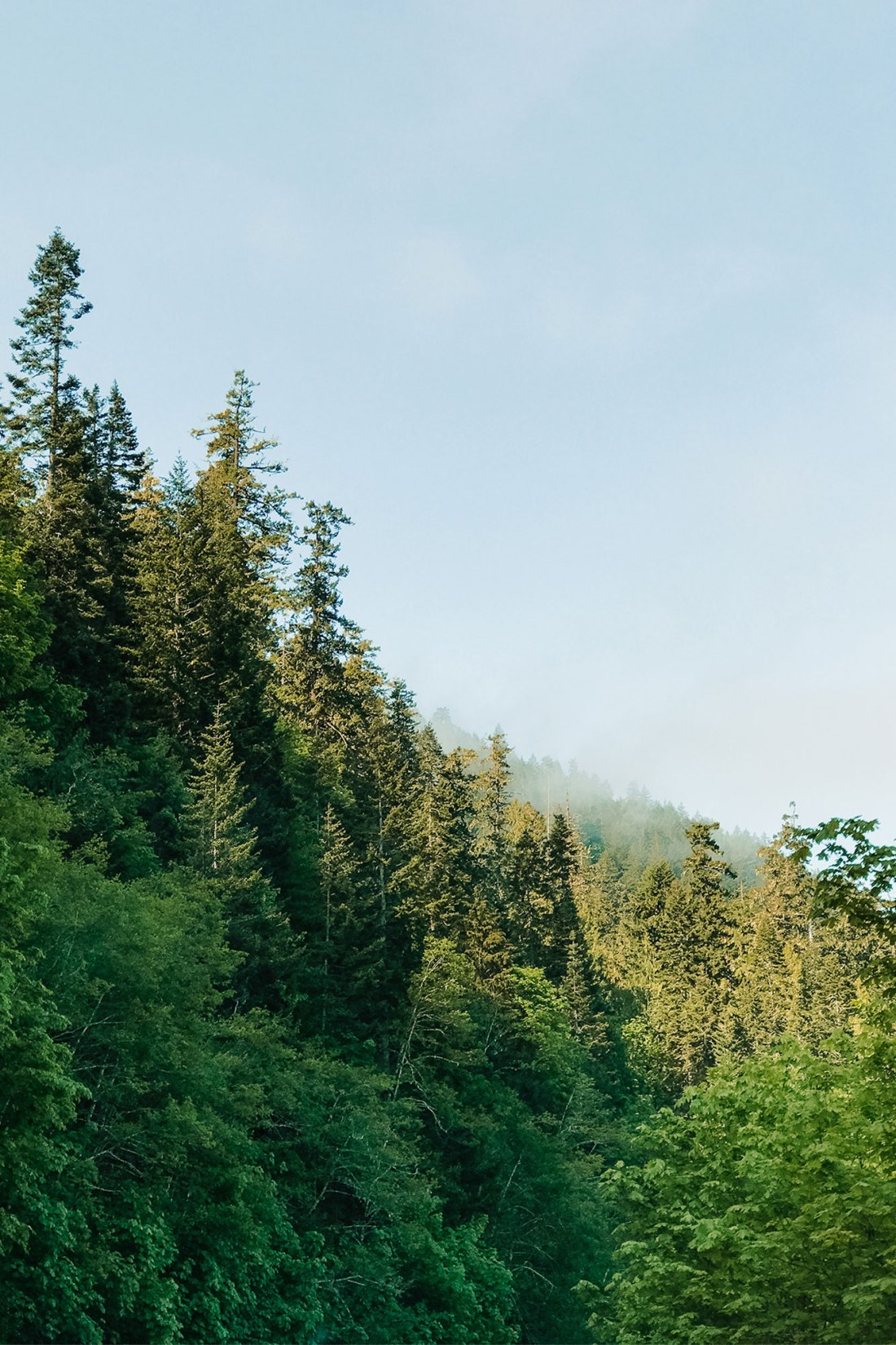 The drive to Crescent Lake, Olympic National Park | Local Love and Wanderlust