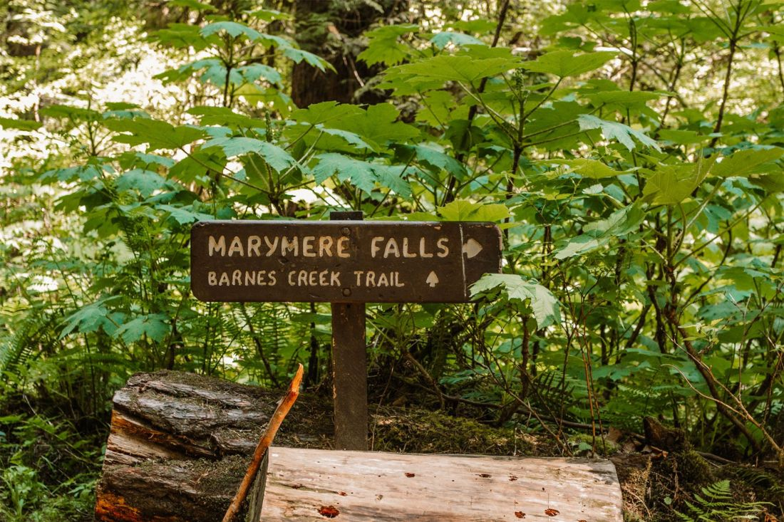 Wooden sign for Marymere Falls trail in Olympic National Park   Local Love and Wanderlust