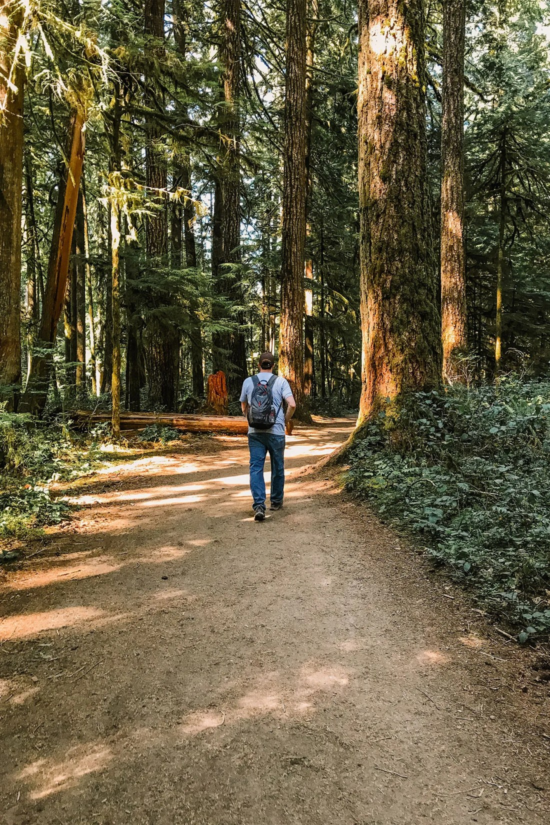 A man walking the trail to Marymere Falls, Olympic National Park   Local Love and Wanderlust