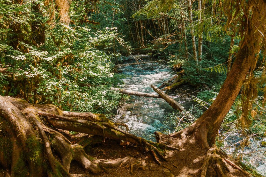 Creek flowing through Olympic National Park