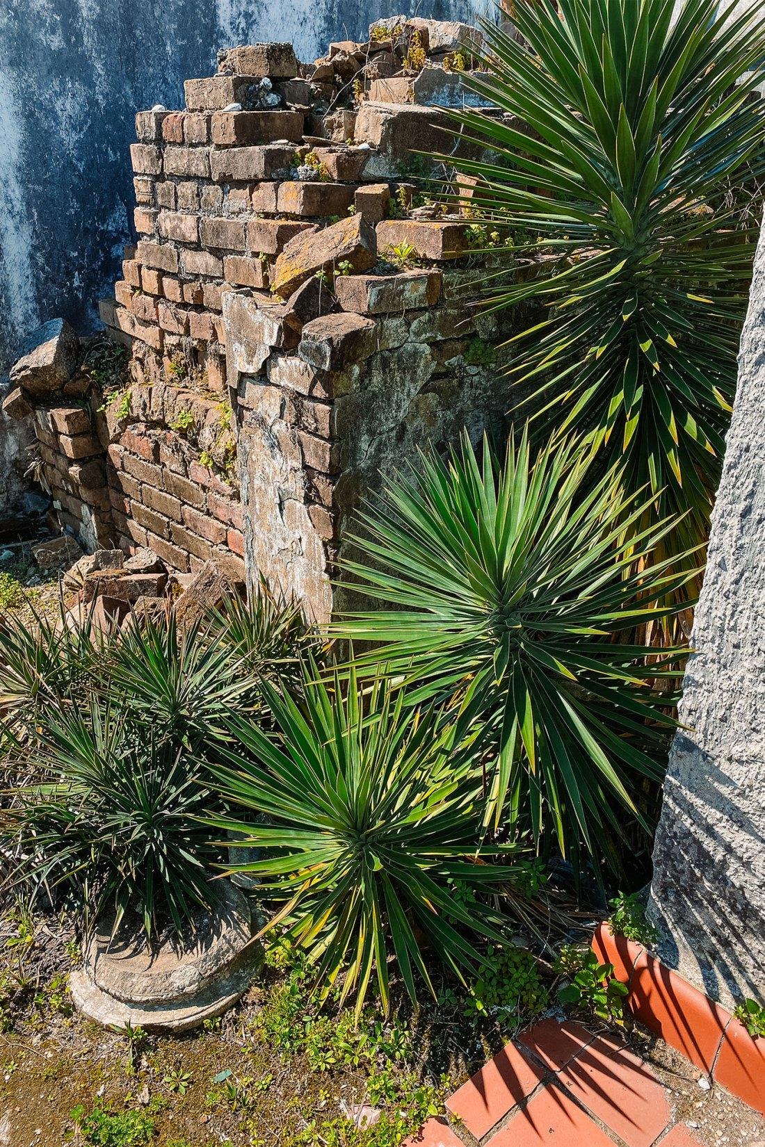 Greenery surrounding aging brick