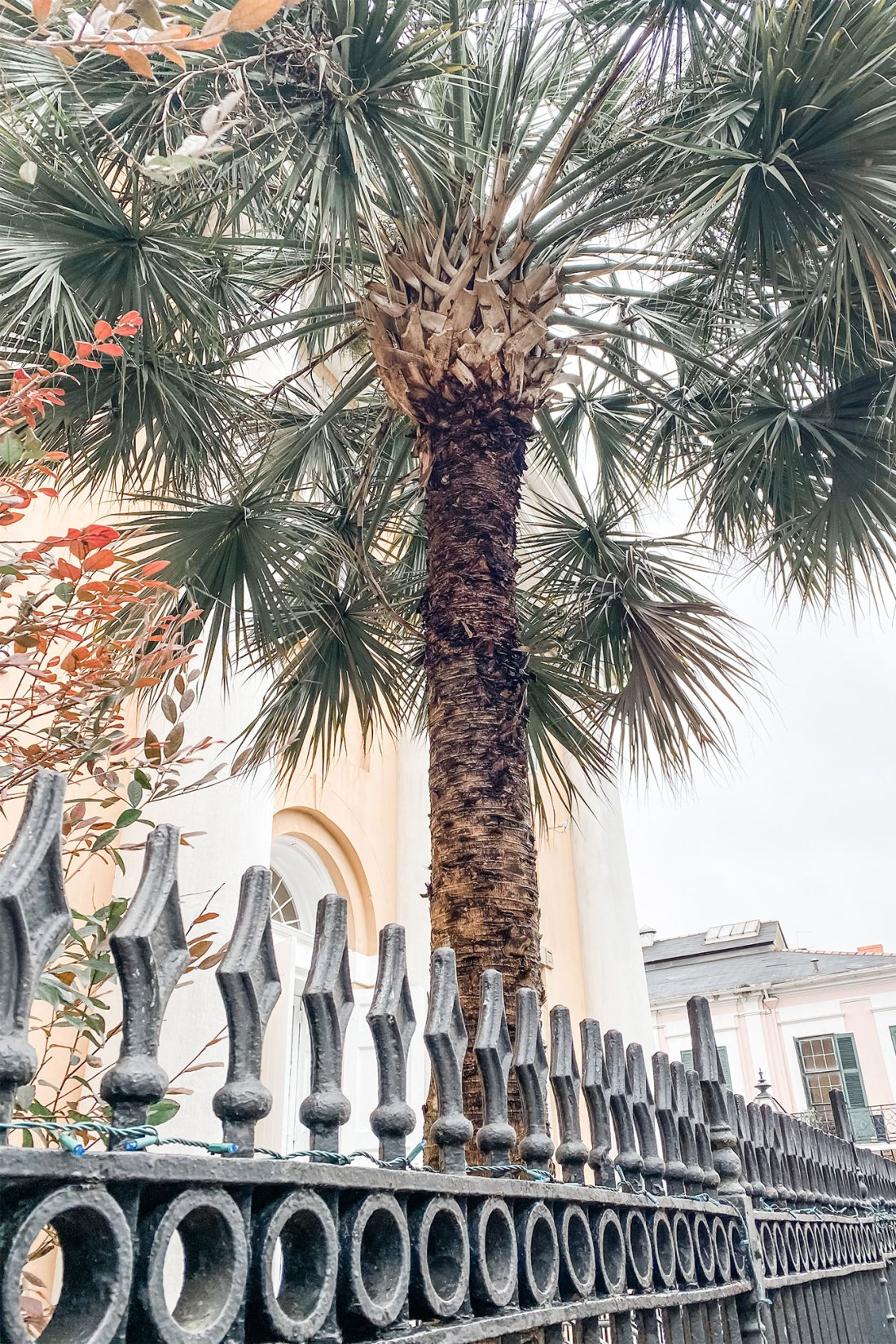 Palm tree next to building with wrought iron fence in New Orleans