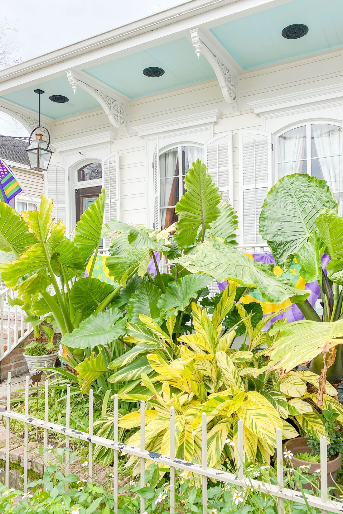 Large green leafy plants in front of home in New Orleans