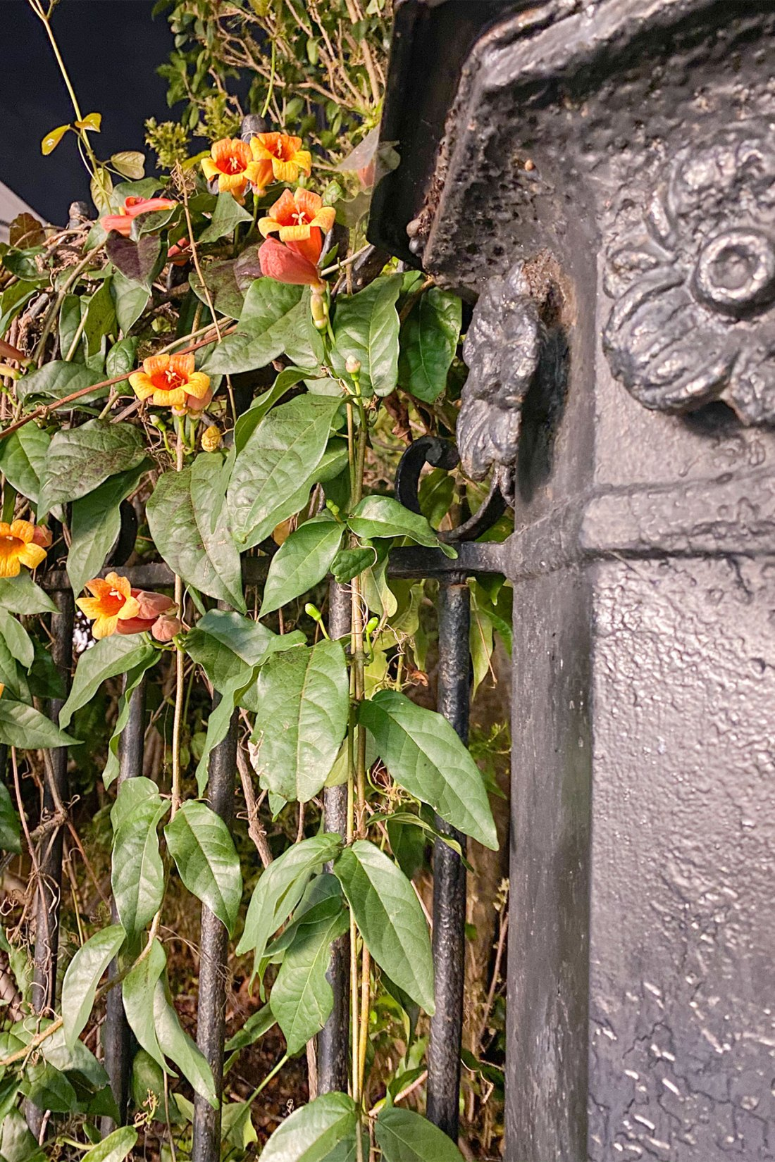 Orange flowers next to ornate fence pole