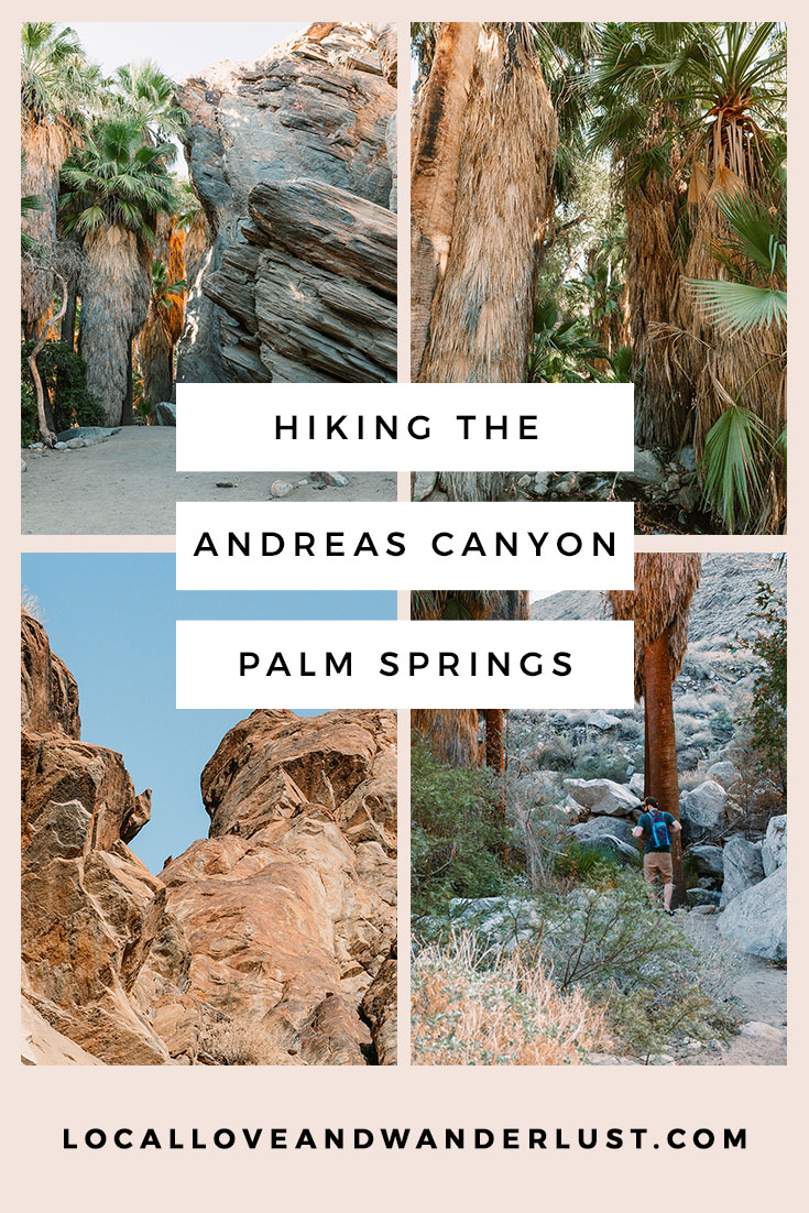 Hiking the Andreas Canyon Palm Springs