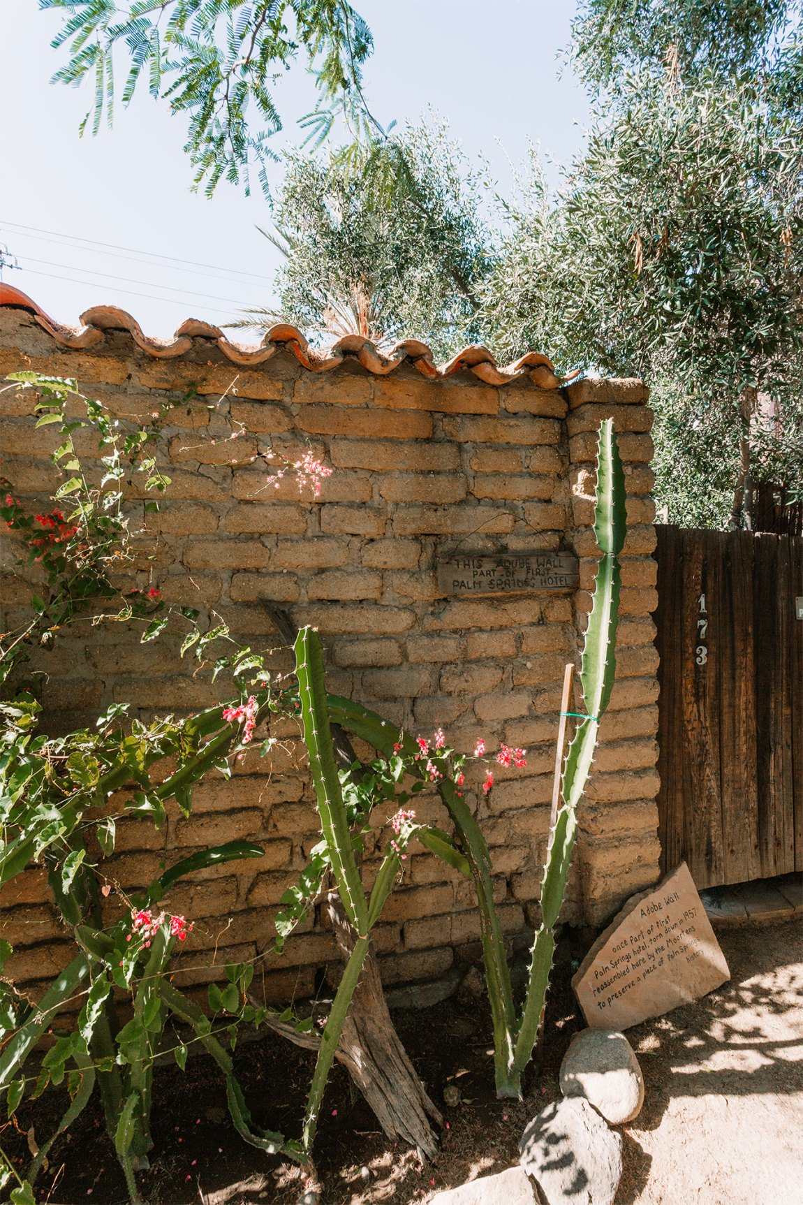 Tall cactus against brick wall