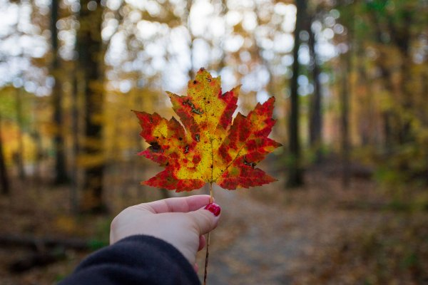 Female holding fall leaf in park