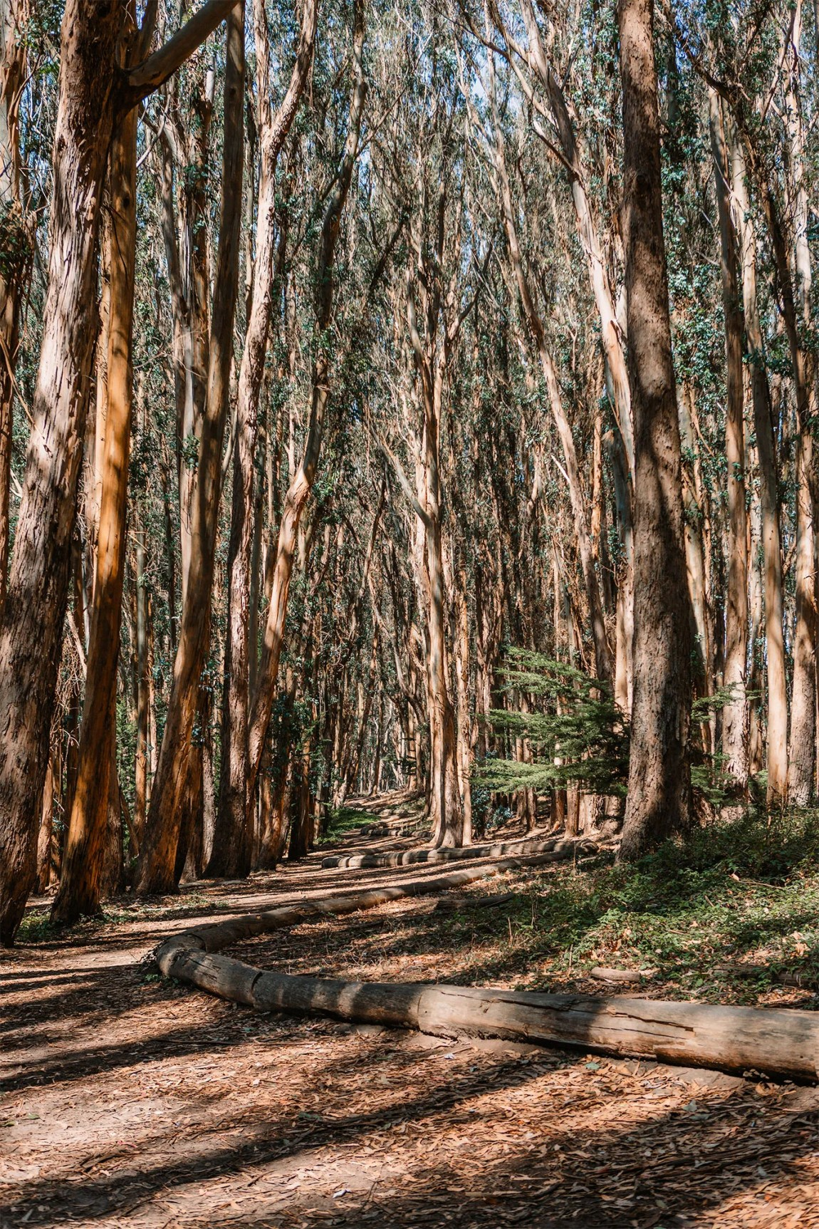 Andy Goldsworthy's Wood Line in Presidio Park San Francisco, California | Local Love and Wanderlust
