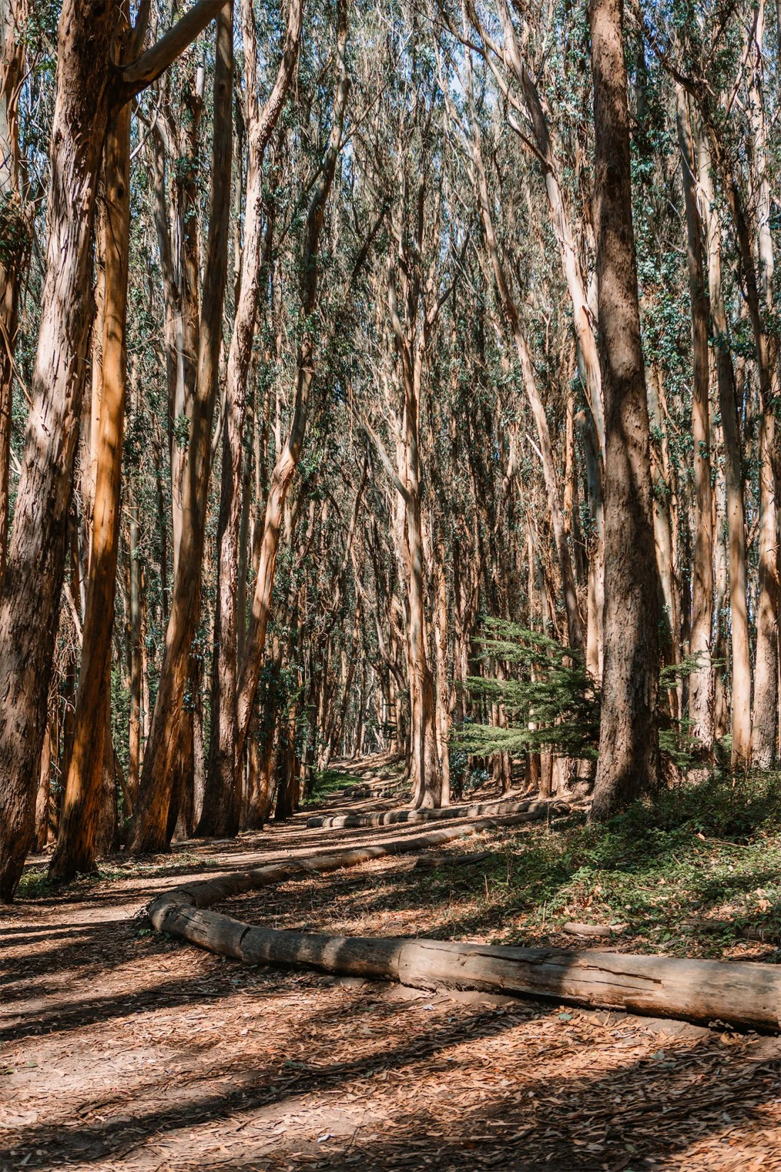 Andy Goldsworthy's Wood Line in Presidio Park San Francisco, California   Local Love and Wanderlust
