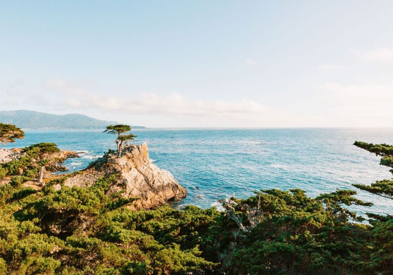 The Lone Cypress on the 17-Mile Drive Monterey, California