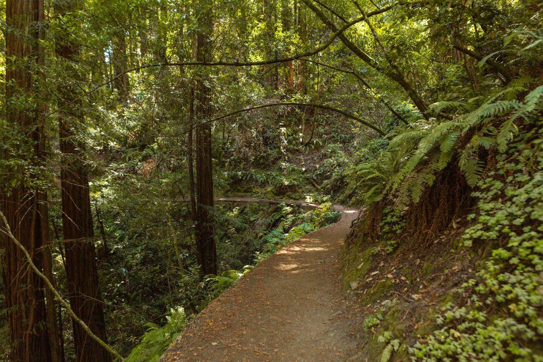 Trail through Muir Woods