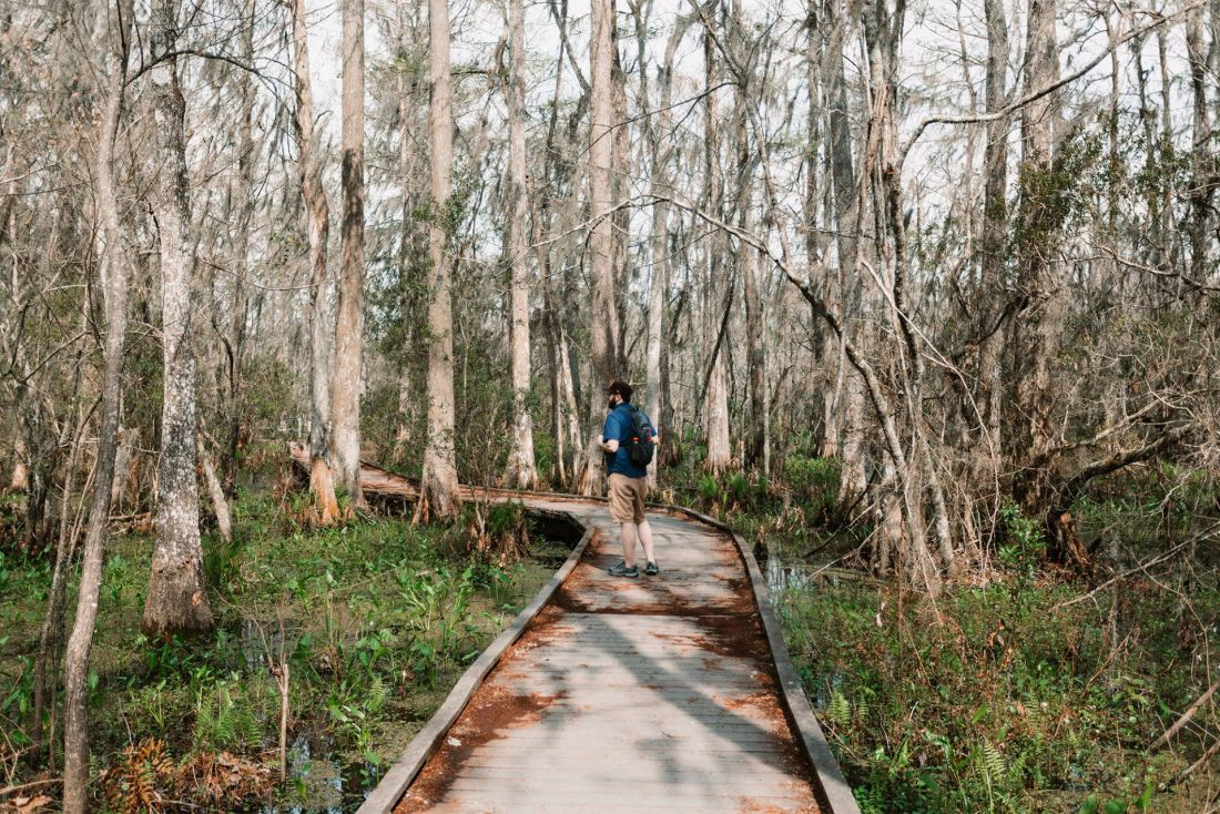 Man walking down wooden trail into the swamp