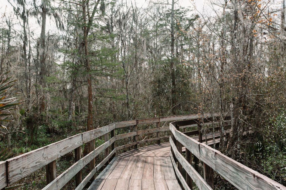Wood trail leading into the swamp