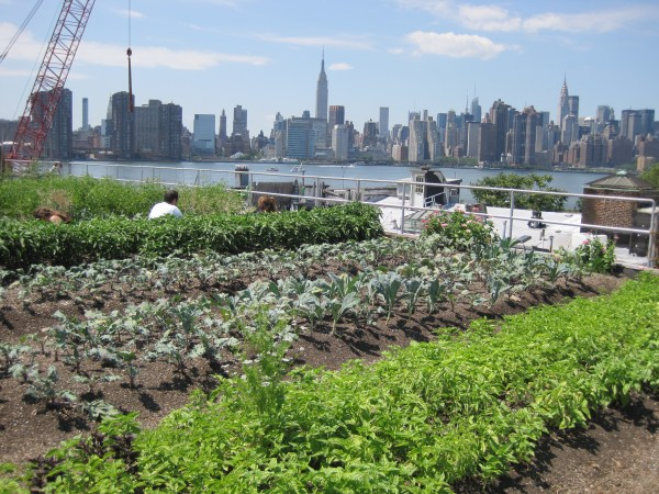 rooftop garden brooklyn LocalMicro – Bread for the City Rooftop Garden, Washington