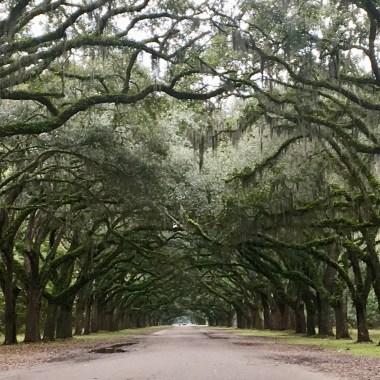 Wormsloe Plantation, Savannah, Georgia